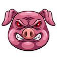 mascot head an pig vector image vector image