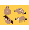 sloth poses cartoon vector image vector image