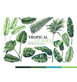 tropical palm leaves and jungle leaves vector image vector image