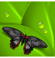 Green background with butterfly and dew vector image