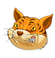 mascot head an cat vector image