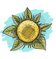 sunflower sketch for your design vector image vector image