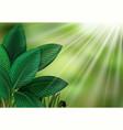 botanical foliage view on sun light vector image vector image