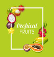 frame with exotic tropical fruits of vector image vector image