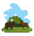 grizzly bear and moose canadian scene vector image vector image