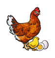 hand drawn brown hen little chicken and peeled vector image vector image