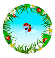 ladybird on sky background vector image vector image