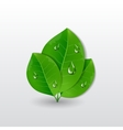 Green leaves with water drops vector image
