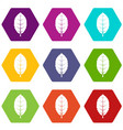 plum leaf icon set color hexahedron vector image vector image