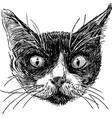 sketch cat head vector image vector image