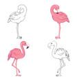 sketched flamingos vector image vector image