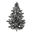 Christmas spruce fir tree silhouette vector image vector image