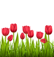 Green grass lawn with tulips isolated on white vector image vector image