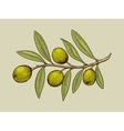 Olive branch engraving style vector image vector image