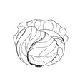 cabbage cabbage clipart vegetable vector image