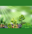 botanical plant view on sun light vector image vector image