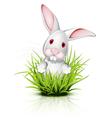 little rabbit grass vector image