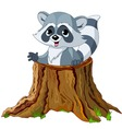 raccoon in tree stump vector image vector image