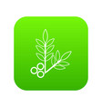 spa eco leafs icon green vector image