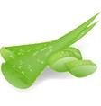 Aloe-vera vector image
