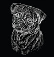 black pug hand drawing portrait vector image