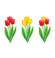 bouquets red and yellow tulips vector image