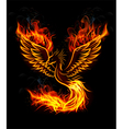 Fire burning Phoenix Bird with black background vector image vector image