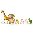 group of wild animal on white background vector image