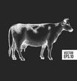 hand drawn cow farm sketch on chalk board retro vector image