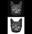 paramedicat vector image vector image
