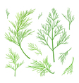 Twigs of dill vector image