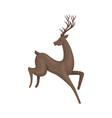 brown deer animal in jumping pose