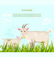 goats at the farm green summer backgrounds vector image vector image