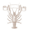 lobster hand drawn sketch vector image vector image