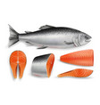 salmon red fish realistic isolated vector image vector image