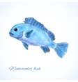 watercolor fish vector image vector image