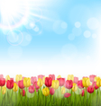 Green grass lawn with tulips and sunlight on sky vector image vector image