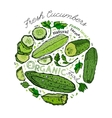 Hand Drawn Cucumber 02 A vector image