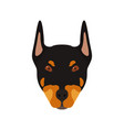doberman dog head portrait of dog vector image vector image