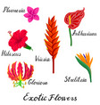 drawing exotic flowers vector image