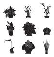 Garden plants Potted flowers in the garden vector image vector image