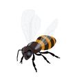 Honey bee icon Flat 3d isometric vector image vector image