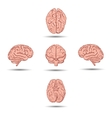 Set of five human brains with shadow from vector image vector image