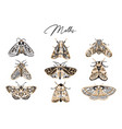 cute butterfly and moth collection in retro style vector image