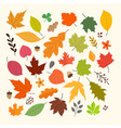 different autumn leaves collection isolated vector image vector image