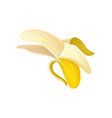half peeled banana colorful icon of tropical vector image vector image