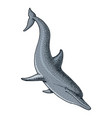 sea creature dolphin engraved hand drawn in old vector image vector image
