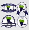 the blue grape vector image vector image
