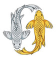 colored with koi carp fish vector image