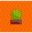 houseplant indoor and office vector image vector image
